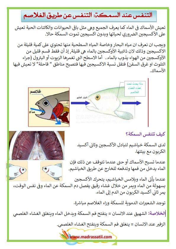 التنفس عند السمكة التنفس الغلصمي التنفس عن طريق الغلاصم موقع مدرستي Ale Map