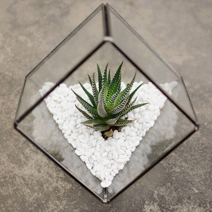 glass cube succulent terrarium kit by dingading terrariums | notonthehighstreet.com