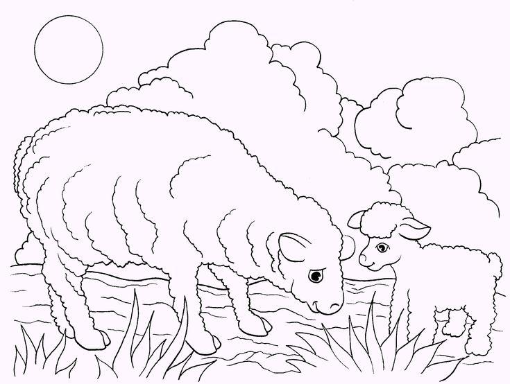 Lamb And Sheep Coloring Page
