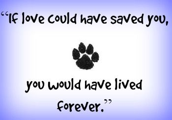 memorial stone for loss of dogs | Beautiful Pet Memorials and Gifts –