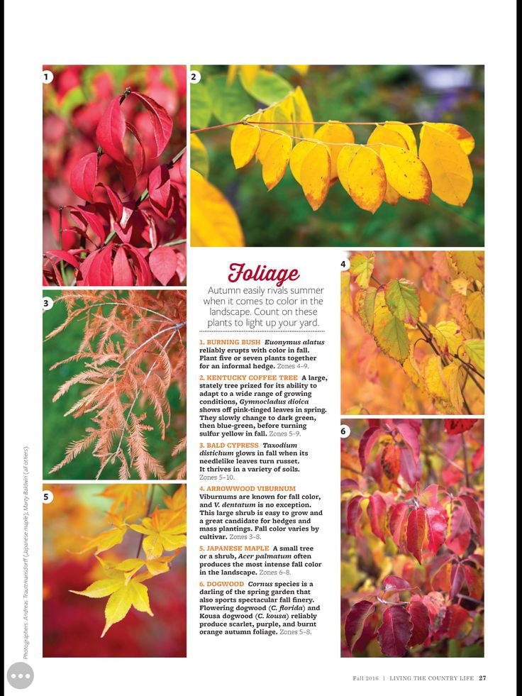 Living The Country Life magazine great plants for fall: foliage