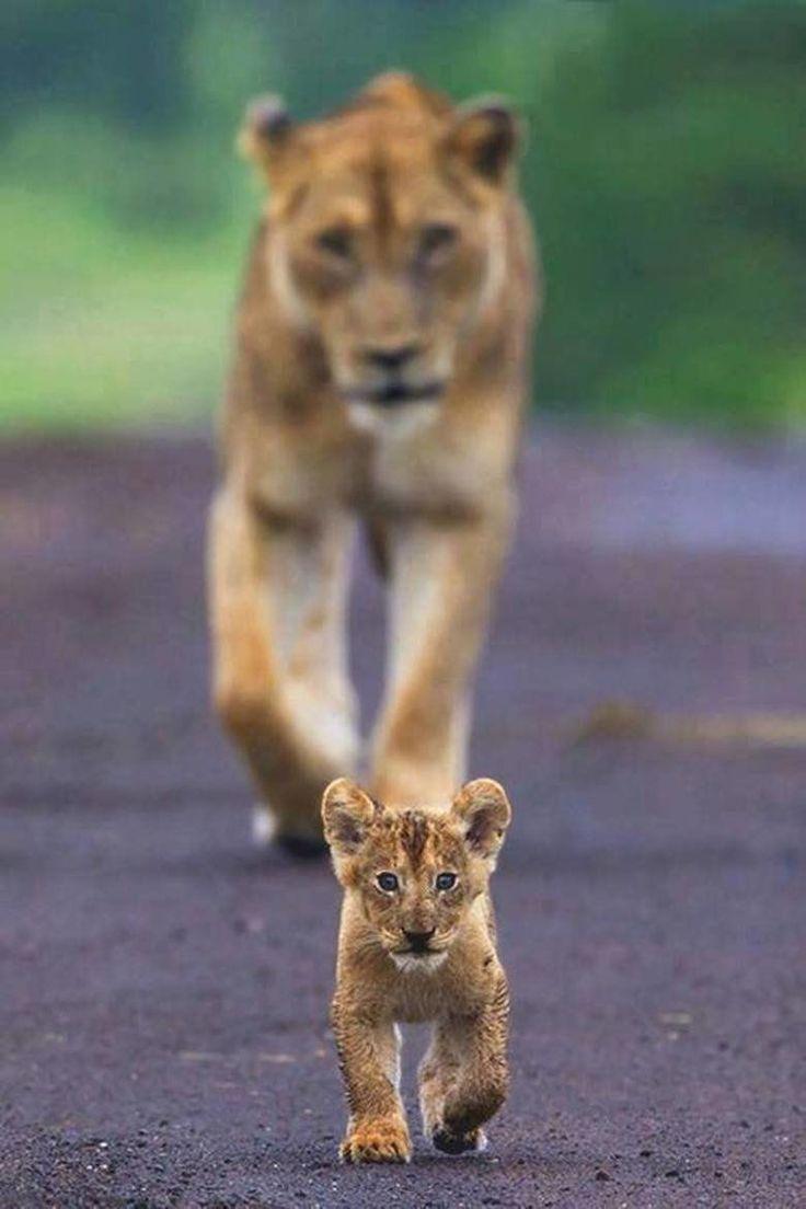 "beautiful-wildlife: "" Next gen … by Som Nath """