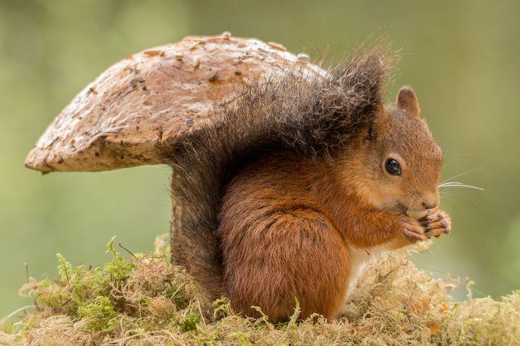 """Herbstdeko Fensterbilder : Über 1.000 Ideen zu """"Eichhörnchen auf ..."""