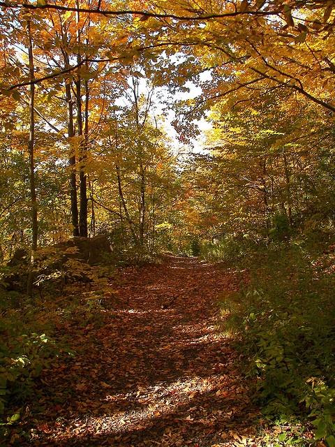 Hiking along the Bruce Trail, Dundas, Ontario.