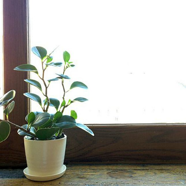 10 Houseplants That Actually Clean The Air You Breathe