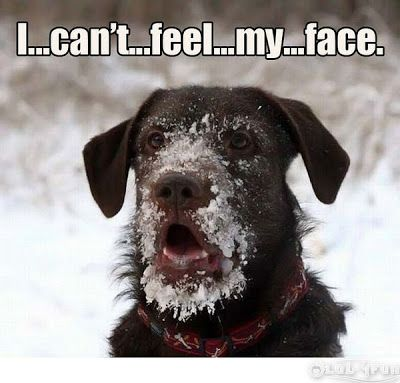 funny frozen sayings | ... - Funny Dogs) - Funny pictures - Funny fail photos - Funny quotes