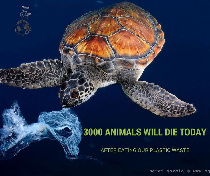 Today over 300 marine animals will die as a direct result of plastic pollution. Now, more than 50% of all sea turtles in the world have eaten plastic. They are not able to tell the difference between plastic and jellyfish. And it is getting worse every year. Researchers at the Ellen Macarthur Foundation have found that by 2050 there could be more plastic in the ocean (by weight), than fish (Source: The New Plastics Economy). This could be up to an astonishing 900 million tonnes of plastic.