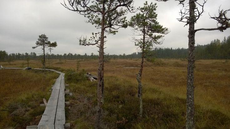 Hyväkuntoinen pitkospuupolku kiertää 2,7 kilometrin reitin.