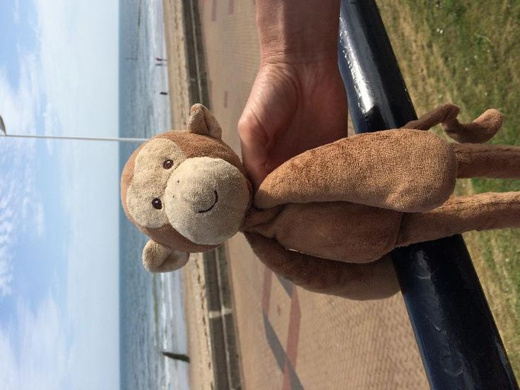 Lost on 03 Sep. 2016 @ Cleethorpes . Toto was left in an Amusements in…