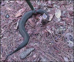 Snake Control, Snake Removal Kansas City, MO