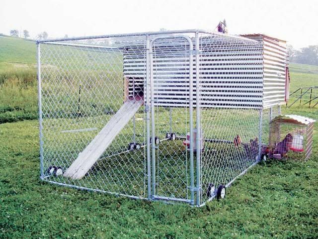 Chicken coop in a dog kennel chickens and worms for Portable dog kennel building