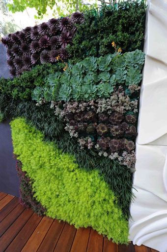 Vertiscape vertical garden system, might be a good option your north boundary line. You get a good idea of the type of coverage you can get.