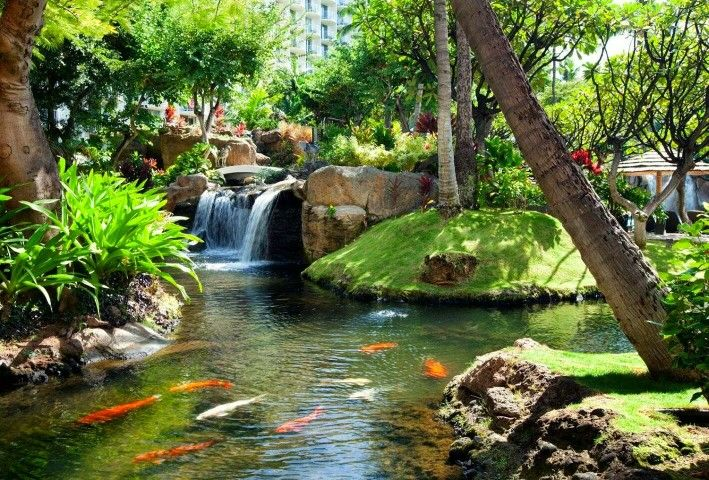 2870 best natural swimming pools ponds and water stuff for Natural ponds and gardens
