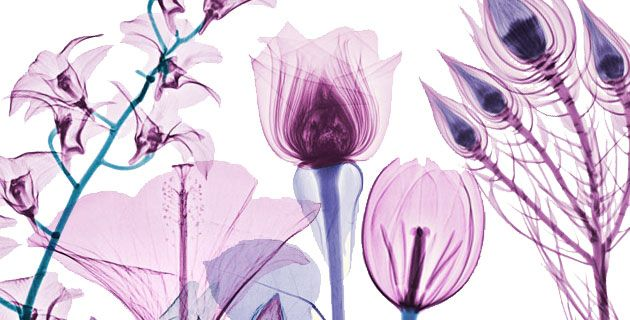 Floral X-Ray pictures by Brendan Fitzpatrick.