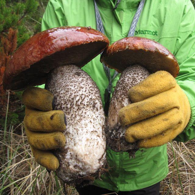 Wild Edible mushrooms                                                                                                                                                                                 More
