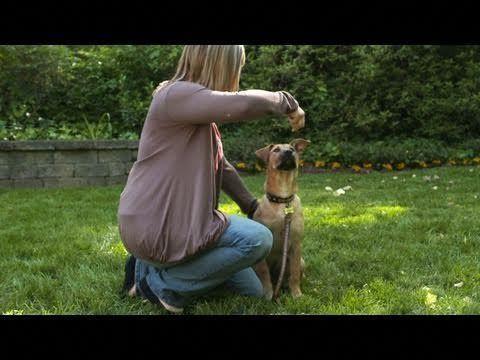 Dog Training Information Dogtrainingmilton 4384864389