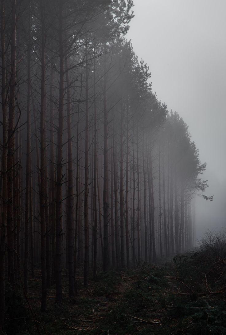 De um lado a densa e negra floresta e do outro separada por um caminho de terra batida, o deserto branco por onde se pode chegar ao centro de nossas almas. É nesse caminho que encontramos nosso verdadeiro eu!