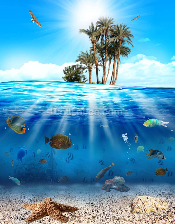 Underwater Scene Beach mural, Underwater wallpaper, Wall