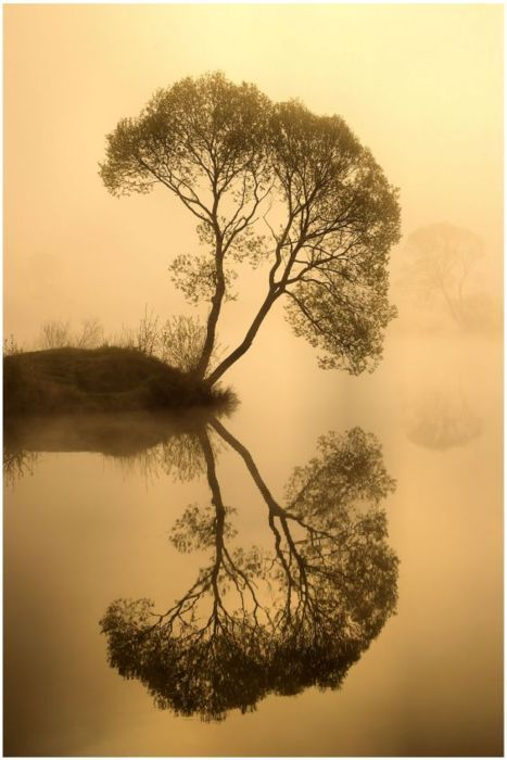 narcissistic tree <-- haha: Photos, Water, Inspiration, Beautiful, Black White, Trees, Pictures, Mirror Image, Natural
