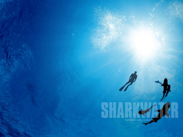 Watch Streaming HD Sharkwater, starring Rob Stewart, Paul Watson, Patrick Moore, Erich Ritter. Sharkwater - The Story 'An eye-opening film...visually stunning... this movie will change the way you see our oceans.' - Bonnie Laufer... #Documentary http://play.theatrr.com/play.php?movie=0856008