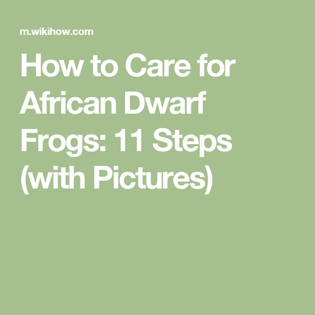 How to Care for African Dwarf Frogs: 11 Steps (with Pictures)