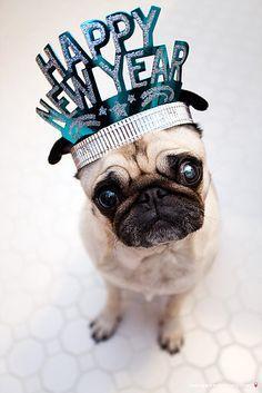 Happy New Year so cut pugs