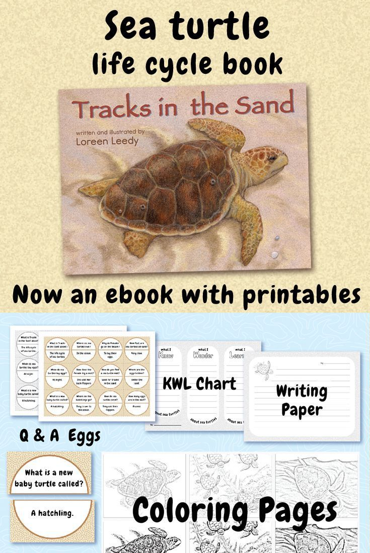From Print To Digital With A Picture Book Loreen Leedy Books More Turtle Life Cycle Life Cycle Books Turtle Life [ 1100 x 735 Pixel ]