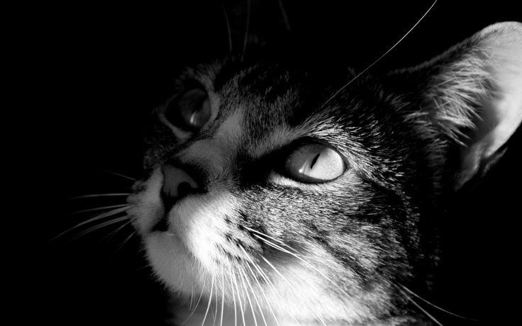 ombra_gatto