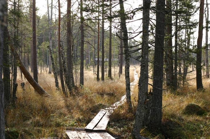 Salamajärven kansallispuistossa voi retkeillä erämaisissa maisemissa, metsäpeurojen poluilla. In Salamajärvi National Park it is possible to hike in wilderness-like landscape, on the peaceful paths following the tracks of the Wild Forest Reindeer. Kuva/Photo: Metsähallitus / Reijo Kuosmanen    www.luontoon.fi/salamajarvi  http://www.facebook.com/MatkaMaalle  http://www.keskisuomi.net/  http://www.centralfinland.net/