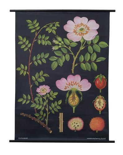 Dog Rose Botanical Poster - love this print! (Southern Bungalow - Office Design Board)   #yourpicks @Apartment Guide Official