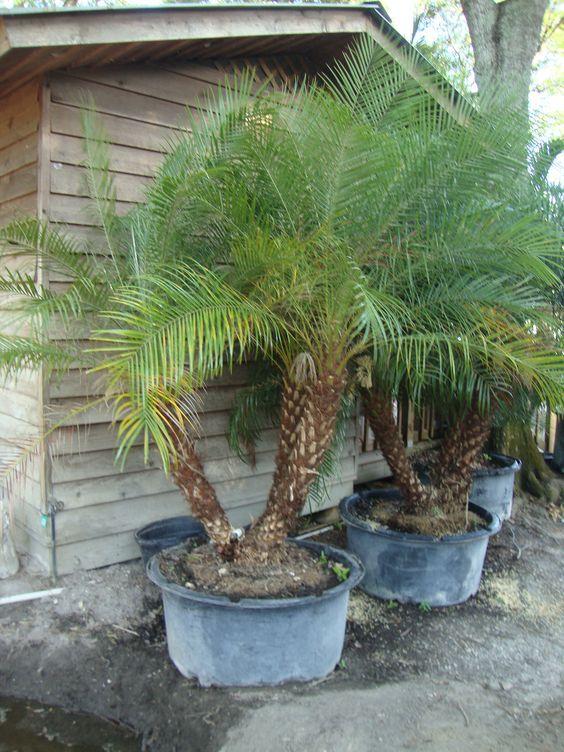 15 Best Tropical Plant Nurseries Wholesale Miami Florida