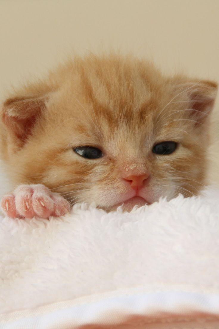 A Cute Little Kitty Cute Kitten Cat Cuteanimals Theworldisgreat Kittens Cutest Kittens Cute Animals