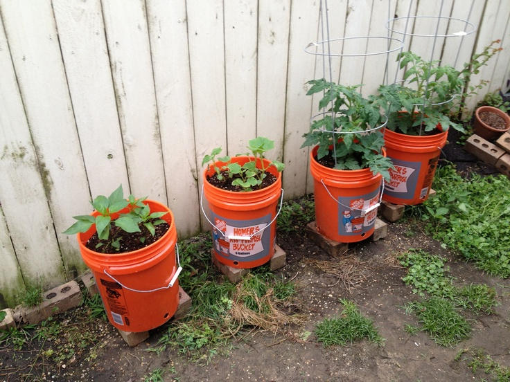 thanks in part to my home depot iu0027m growing some of our favorite veggies in 5 gallon buckets we have a small yard with a small dog so digging a garden plot