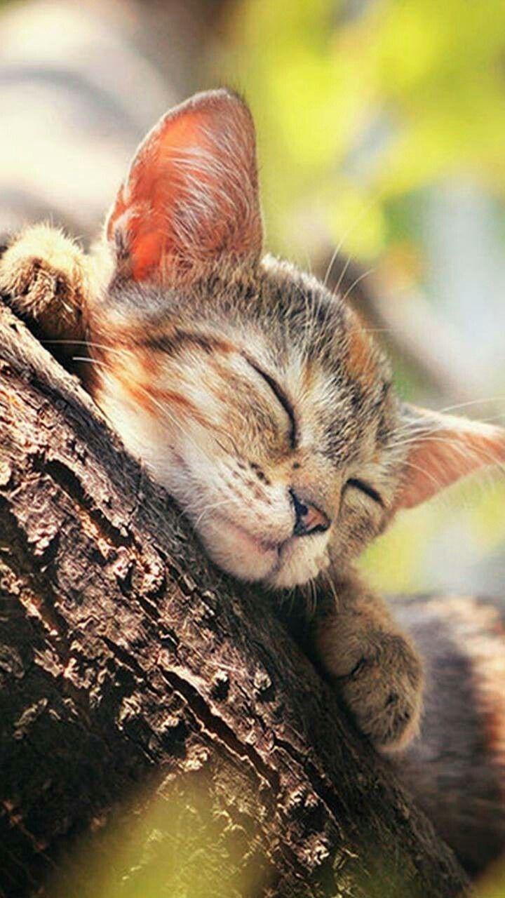 Pin Von Elson Mandela Auf Puurfect Cats Katzen Katzenbabys Baby Katzen