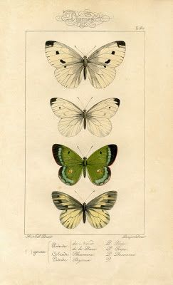 Natural History Printable Image - Moths - Butterflies - The Graphics Fairy
