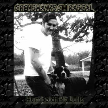 Crenshaw's Ch Rascal
