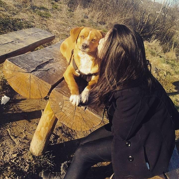 #dog #cute