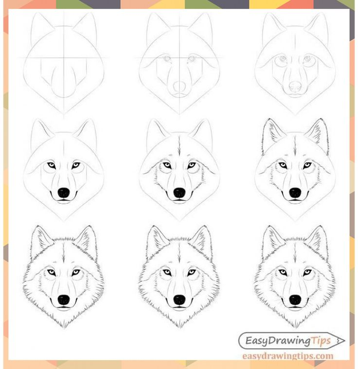 wie zeichnet man ein wolfsgesicht  kopf schritt für