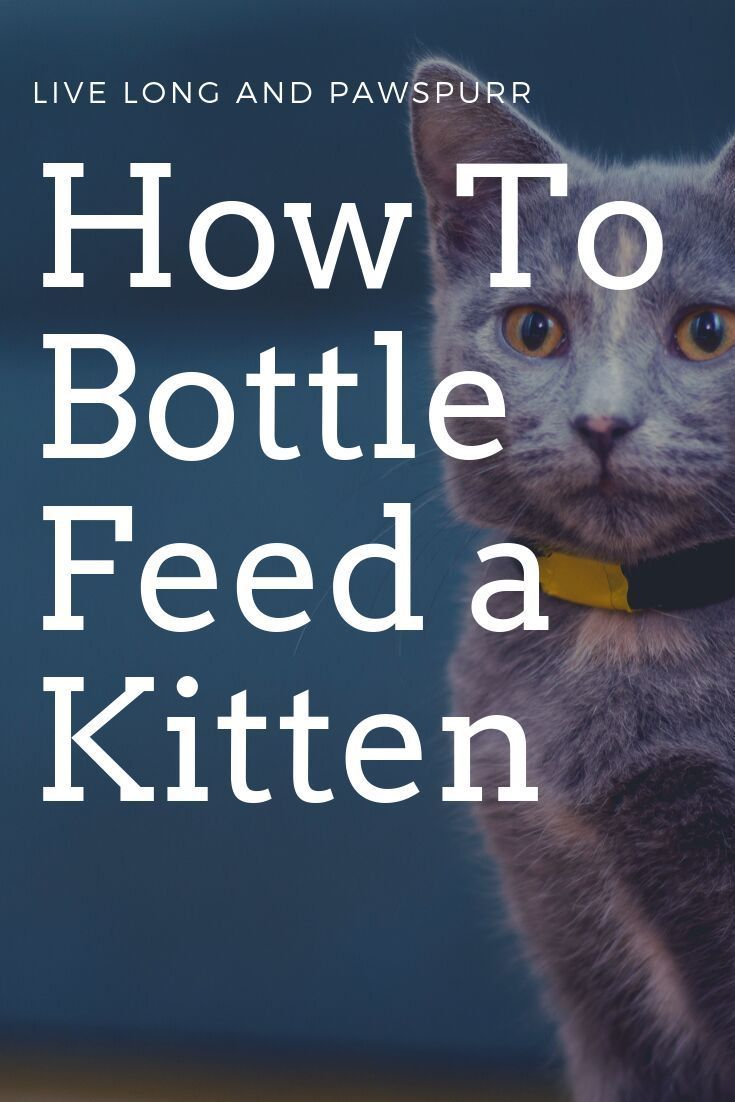 How To Bottle Feed A Kitten Live Long And Pawspurr In 2020 Feeding Kittens Bottle Feeding Pet Care Cats