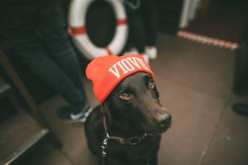 #Beanie #Dog #uberding #VIOVIO FALL OUT V15