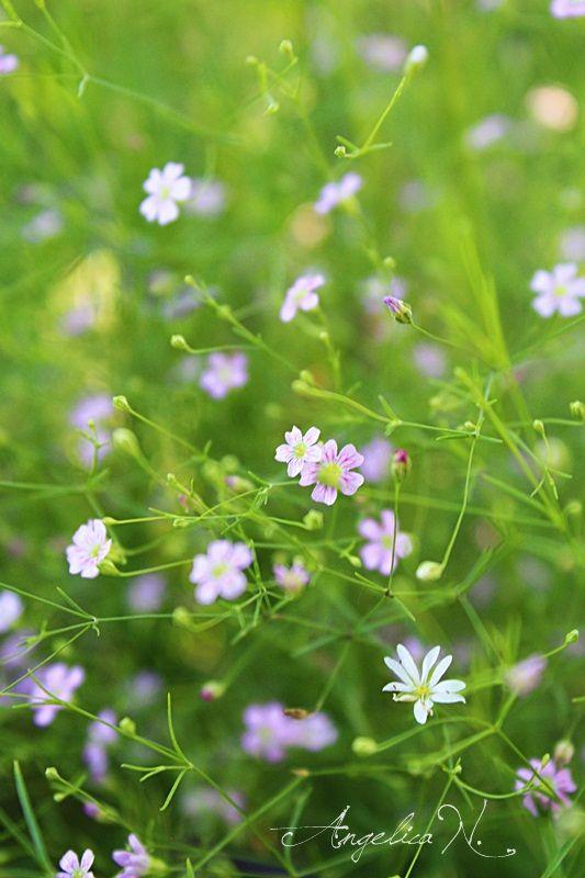 Frumoasa viata la tara...flori minunate