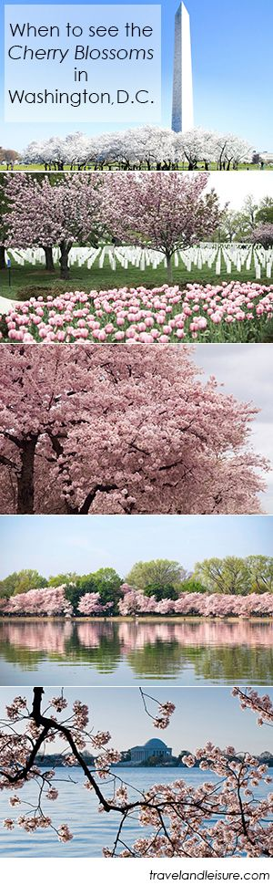 Spring is nearly upon us! Find out the best time to visit Washington, D.C. for the cherry blossom bloom.