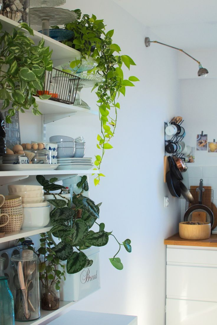 Urban Jungle Bloggers: Kitchen Greens by Papierowy wymiar