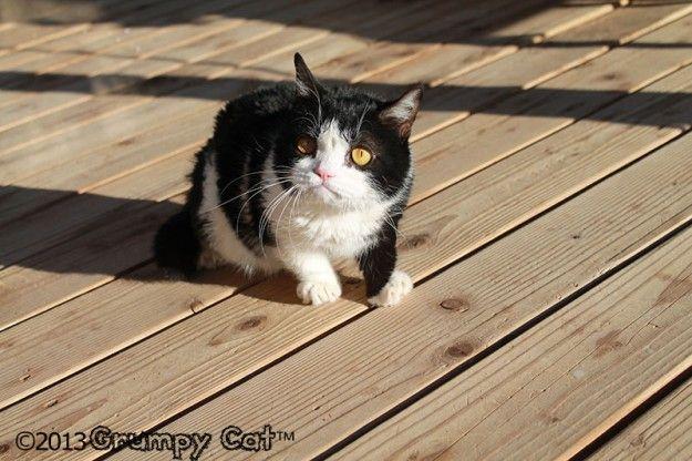 The Daily Grump | January 20, 2013: Pokey Photo, Aka Tardar, Brother Pokey, Adorable Cat, Aka Grumpycat, Tardar Sauces, Grumpy Cat, Sibling Pokey, Cat Brother