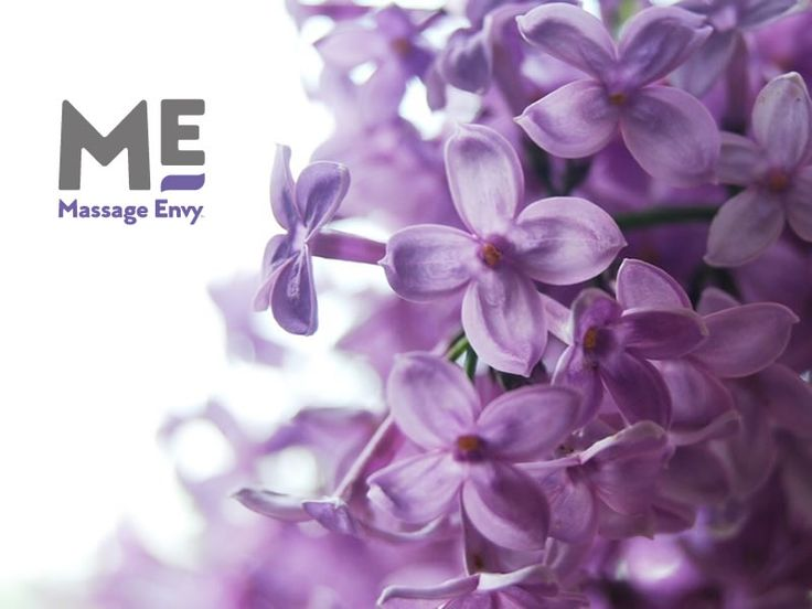 The Health Benefits of Lilac <3  https://www.leaf.tv/articles/what-are-the-health-benefits-of-lilac/ #massageenvyhi #aromatherapy #health #wellness #relaxation #antistress #antiaging #beauty #joy #happiness #themoreyouknow