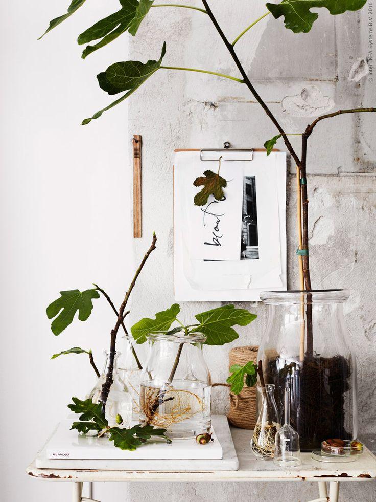 Enkla glasvaser bildar ett stillsamt blickfång med grönskande kvistar. BEGÄRLIG vas, ENSIDIG vas samt VÅRVIND vaser set om 2.