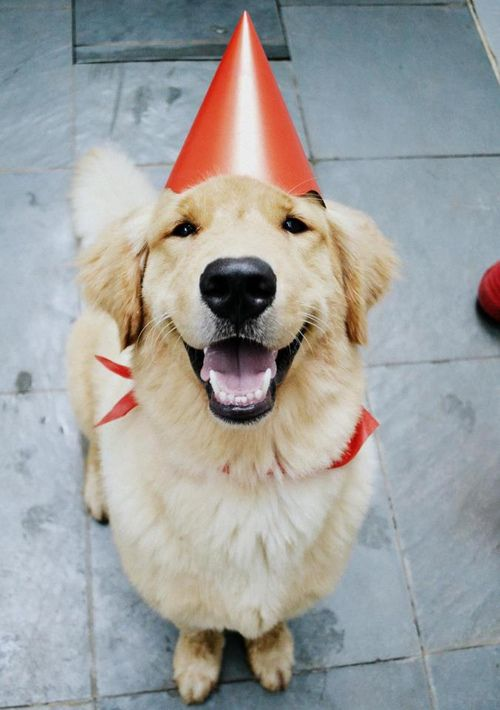 Smiling party puppy! Wish my Annie would sit this long with a party hat on!