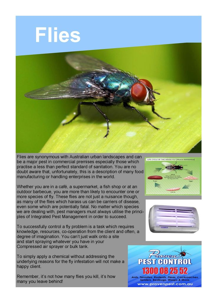 Pest Control Flies in Dapto