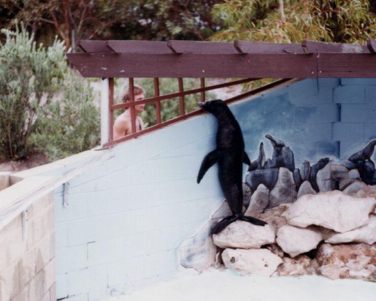 Cindy - New Zealand Fur Seal