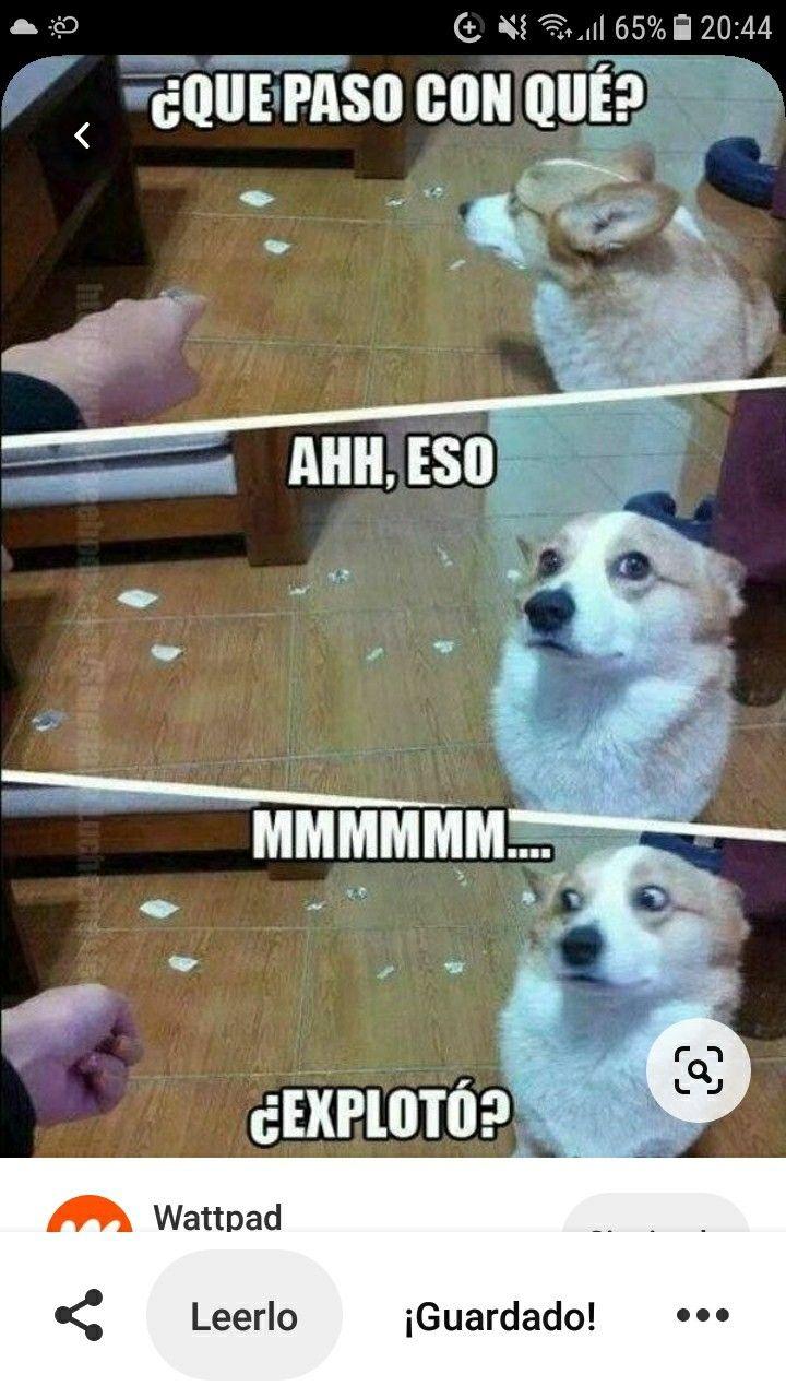 Meme Del Perro Imagenes De Risa Memes Memes Divertidos Memes